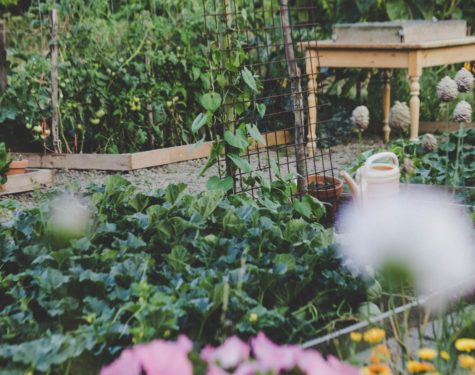 Benefits of Growing an Edible Landscape